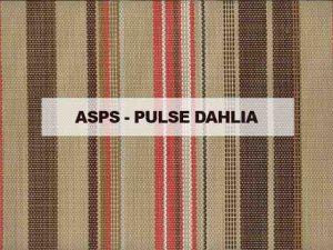 ASPS PULSE DAHLIA